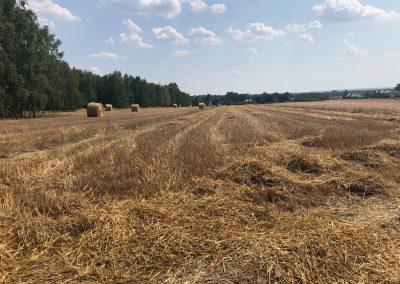 Nieruchomości rolne